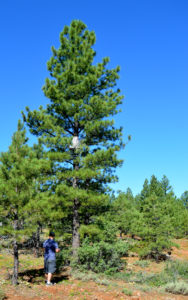 Treestand Locations